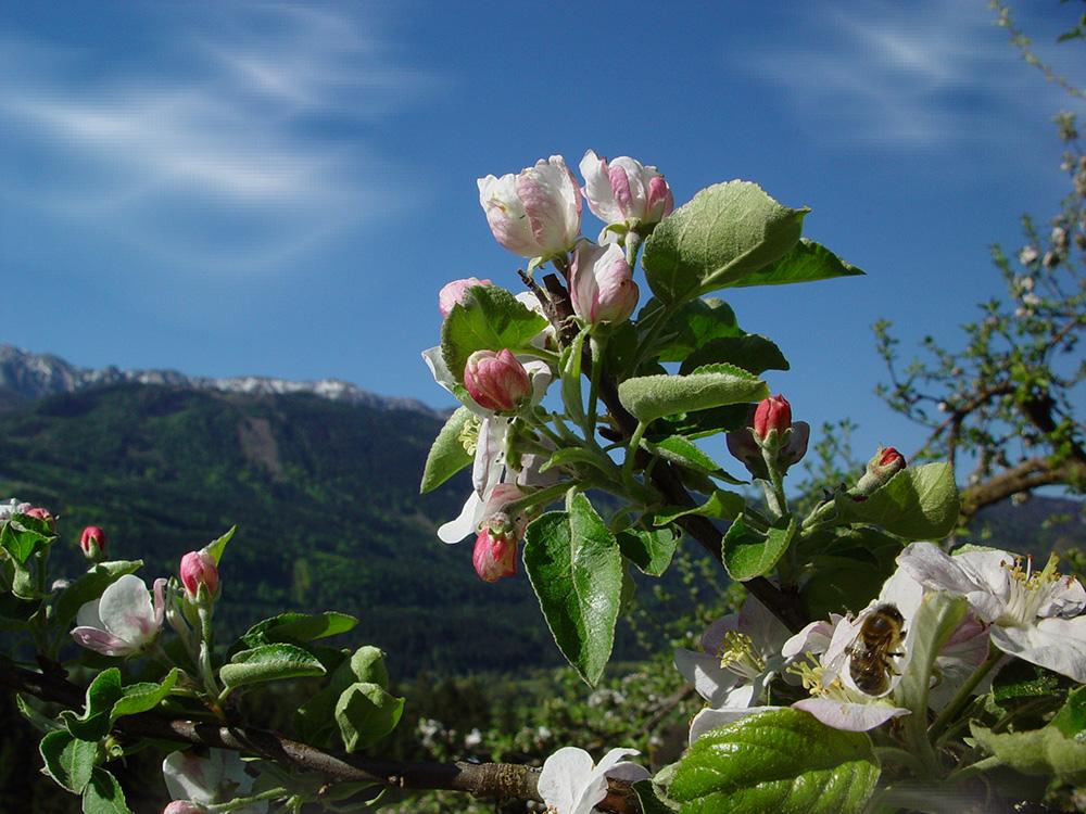 spring-blumen01
