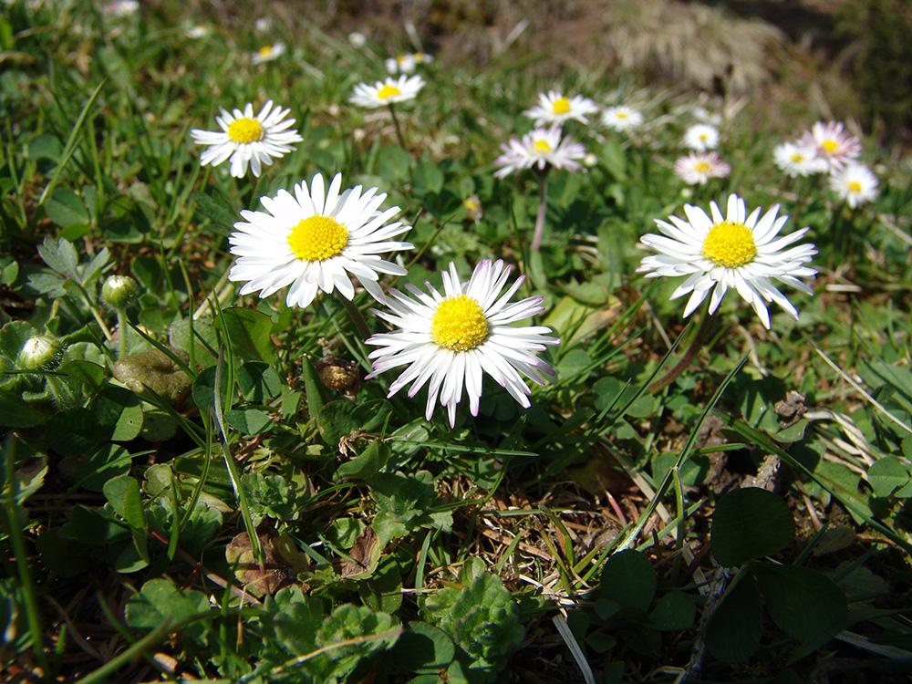 spring-blumen02