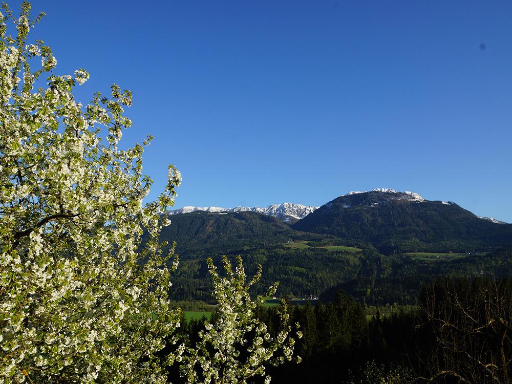 spring-panorama